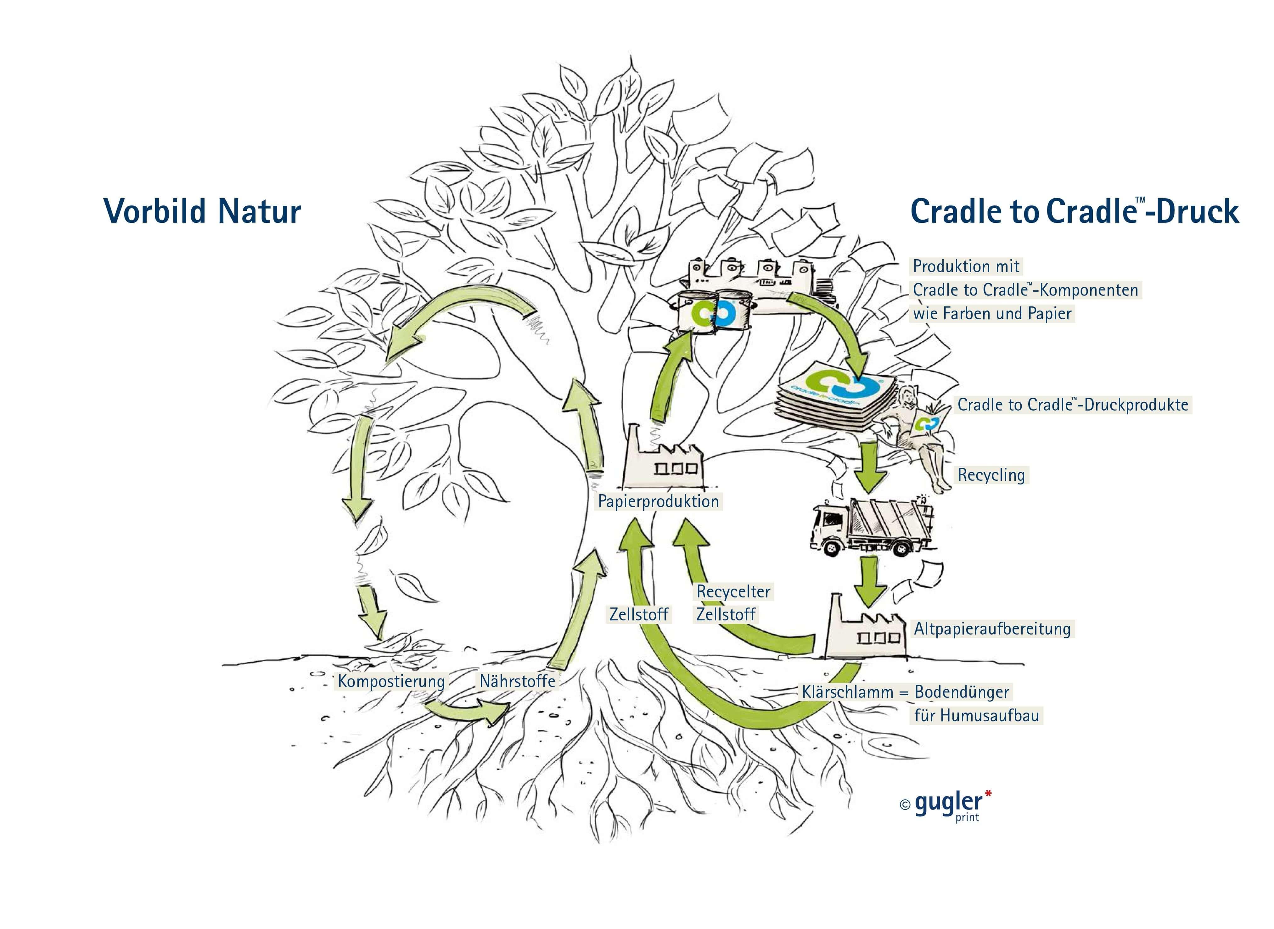 C2C Baum gugler large